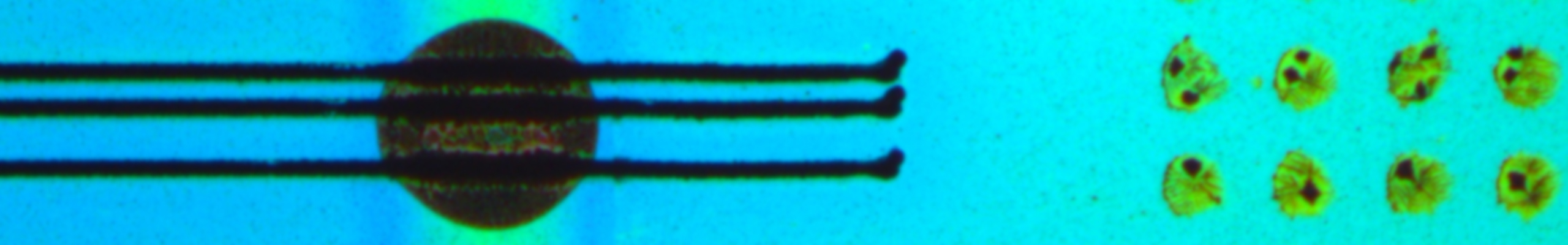 microscope image of biosensors from Chilkoti lab